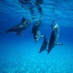 delfin sonnik 150x150 - Сонник дельфин