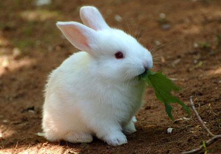 krolik11 - Сонник кролик