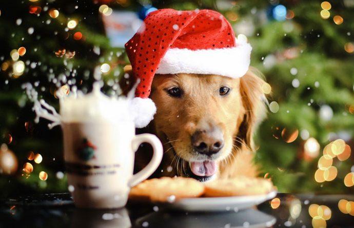 Год Собаки — гороскоп рожденных в год Собаки