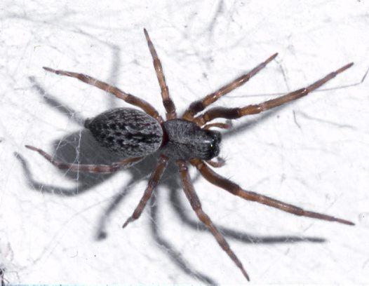 pauk1 - Приметы паук в доме