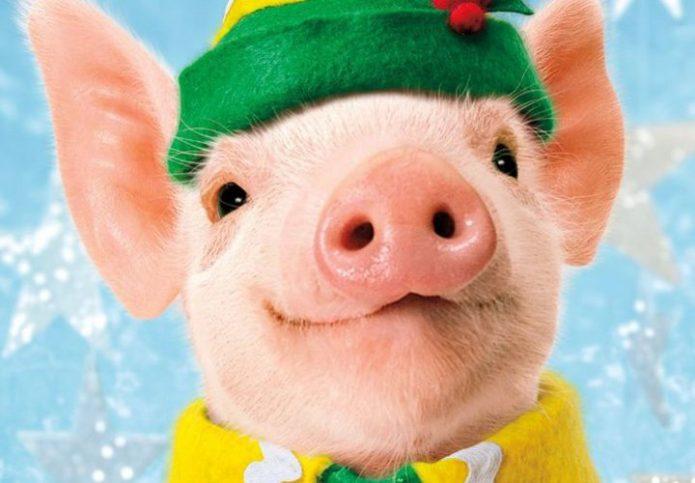 Год Свиньи — характеристика рожденных в год Свиньи