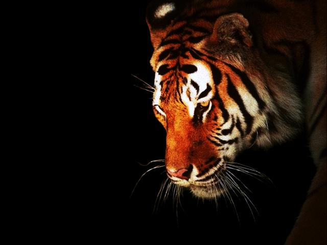 u10 8241 - Сонник тигр во сне
