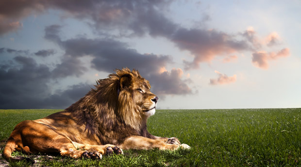 Гороскоп Льва на сегодня