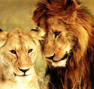 Совместимость знаков Зодиака Лев с другими знаками