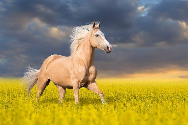 Рожденные в год Лошади — гороскоп